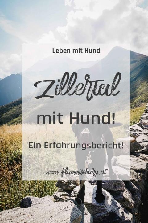 Ausflug mit Hund: Zillertal wir kommen
